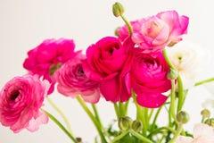 Boeket van kleurrijke Perzische boterbloemenbloemen (ranunculus) Royalty-vrije Stock Fotografie