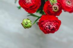 Boeket van kleurrijke ranunculus van boterbloemen rode bloemen op witte Achtergrond Rustieke stijl Royalty-vrije Stock Afbeelding