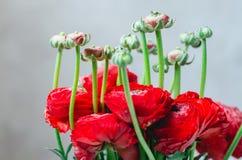 Boeket van kleurrijke ranunculus van boterbloemen rode bloemen op witte Achtergrond Rustieke stijl Stock Afbeelding