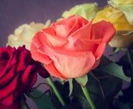 Boeket van kleurrijke rozen Stock Fotografie