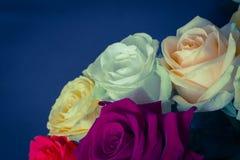 Boeket van kleurrijke rozen met blauwe dichte omhooggaand als achtergrond Gestemd e Royalty-vrije Stock Fotografie