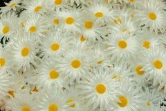 Boeket van kunstmatige madeliefjes met witte bloemblaadjes royalty-vrije stock foto