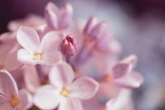 Boeket van lilac bloemen Stock Afbeeldingen