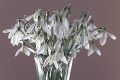 Boeket van mooie de lentebloemen - sneeuwklokjes Royalty-vrije Stock Afbeelding