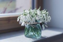 Boeket van mooie de lentebloemen - sneeuwklokjes op zonnige dag Stock Afbeelding