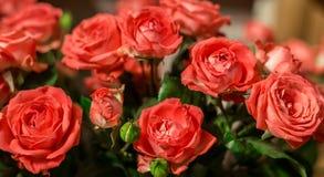 Boeket van mooie roze rozen Stock Foto