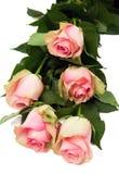 Boeket van mooie rozen Royalty-vrije Stock Foto