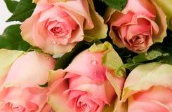 Boeket van mooie rozen Royalty-vrije Stock Fotografie
