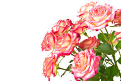Boeket van mooie rozen. Stock Foto