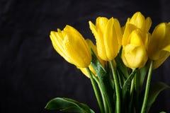 Boeket van mooie verse gele tulpen in dauw op donkere achtergrond royalty-vrije stock fotografie