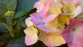 Boeket van multicolored bloemen royalty-vrije stock foto