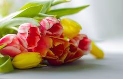Boeket van multicolored tulpen op een grijze achtergrond royalty-vrije stock afbeelding