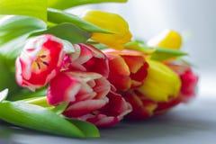 Boeket van multicolored tulpen op een grijze achtergrond stock foto's