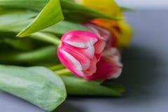 Boeket van multicolored tulpen op een grijze achtergrond stock afbeelding