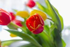 Boeket van multicolored tulpen op een grijze achtergrond royalty-vrije stock afbeeldingen