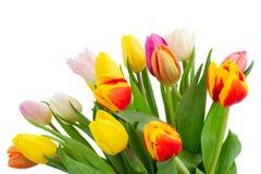Boeket van multicolored tulpenbloemen in wit Stock Fotografie