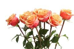 Boeket van oranje rozen Stock Foto