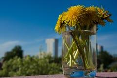 Boeket van paardebloemen in een glas in helder zonlicht Royalty-vrije Stock Foto's