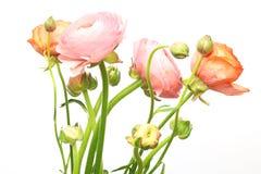 Boeket van Perzische boterbloem stock foto's