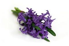 Boeket van purpere hyacint royalty-vrije stock fotografie