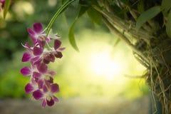 Boeket van purpere orchideebloem stock afbeeldingen