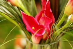 Boeket van rode bloemen abstrac Stock Foto