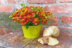 Boeket van rode bloemen en een reuzeslak Stock Fotografie