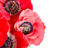 Boeket van rode bloemen op wit Royalty-vrije Stock Fotografie