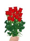 Boeket van rode die rozen in hand close-up op wit wordt geïsoleerd Stock Afbeeldingen