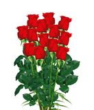 Boeket van rode die rozenclose-up op wit wordt geïsoleerd Stock Afbeeldingen