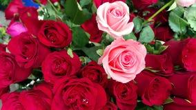 Boeket van rode en roze rozen royalty-vrije stock afbeelding
