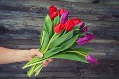 Boeket van rode en violette tulpen ter beschikking Stock Foto