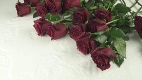 Boeket van rode rozen die op witte achtergrond met video van de de voorraadlengte van de water de langzame motie vallen stock footage
