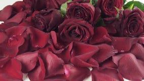Boeket van rode rozen met dalingen die van water aan achtergrond van de video van de de voorraadlengte van de bloemblaadjes langz stock video