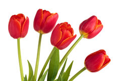 Boeket van rode tulpen Royalty-vrije Stock Afbeelding