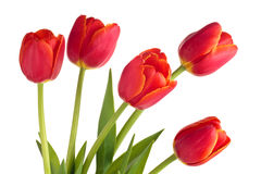 Boeket van rode tulpen Stock Fotografie