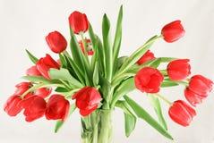 Boeket van rode tulpen in glasvaas Royalty-vrije Stock Foto