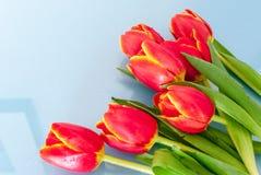 Boeket van rode tulpen op een lichte achtergrond Stock Foto