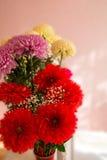 Boeket van rood, wit en roze chrysanten. Royalty-vrije Stock Afbeelding