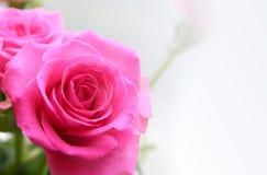 Boeket van rosa rozen Royalty-vrije Stock Foto