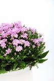 Boeket van roze bloemen Royalty-vrije Stock Foto's