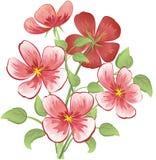 Boeket van roze bloemen Stock Afbeelding