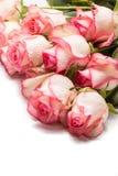 Boeket van roze roze bloemen op witte achtergrond Royalty-vrije Stock Fotografie