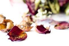 Boeket van roze droge rozen op achtergrond Stock Afbeelding