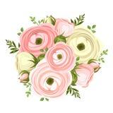 Boeket van roze en witte ranunculus bloemen Vector illustratie Stock Fotografie