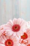Boeket van roze gerberamadeliefjes stock foto