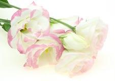 Boeket van roze-getinte eustomas Royalty-vrije Stock Afbeeldingen