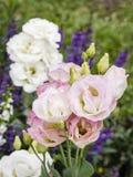 Boeket van roze lisianthus of Eustoma-bloemen, selectieve nadruk Stock Foto