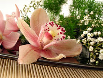 Boeket van roze orchideeën en witte bloemen op plaat Royalty-vrije Stock Afbeelding
