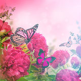 Boeket van roze pioenen Stock Afbeeldingen